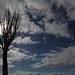 空に伸びる枝