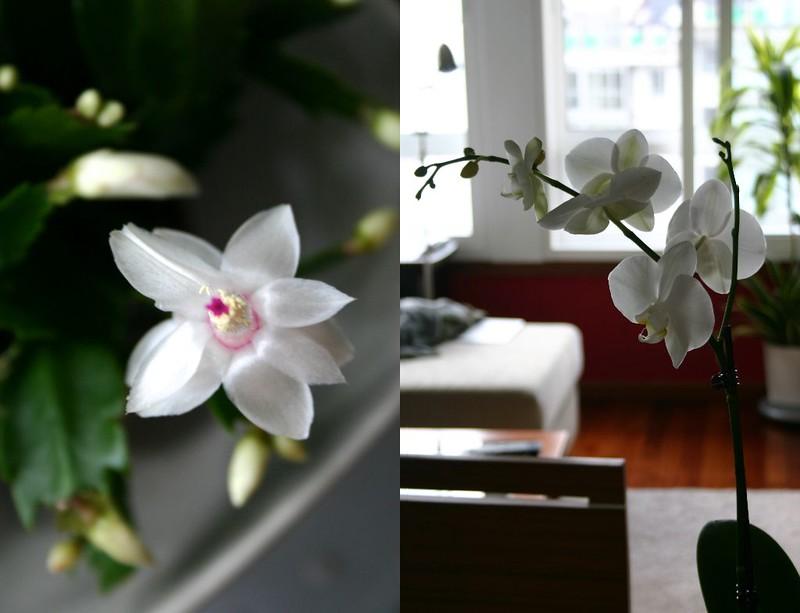 flores_2012