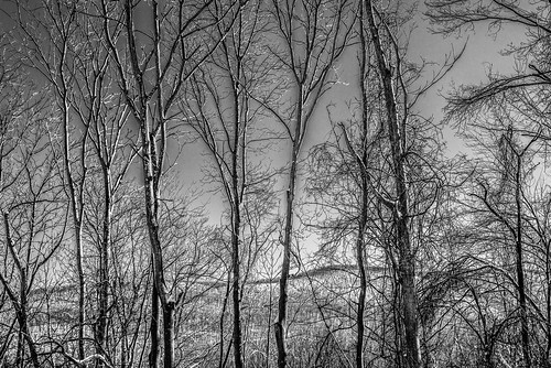 new york trees winter blackandwhite usa snow landscape woods state hills treebranches treescape hudsonrivervalley snowscape snowcovered autofocus digitalblackandwhite thegalaxy fishkillny bestcapturesaoi elitegalleryaoi mygearandme blackwhitepassionaward 845areacode ringexcellence blinkagain treesentwinedbranches
