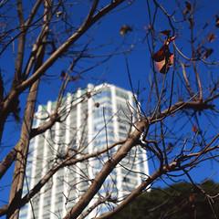 枝先の枯葉