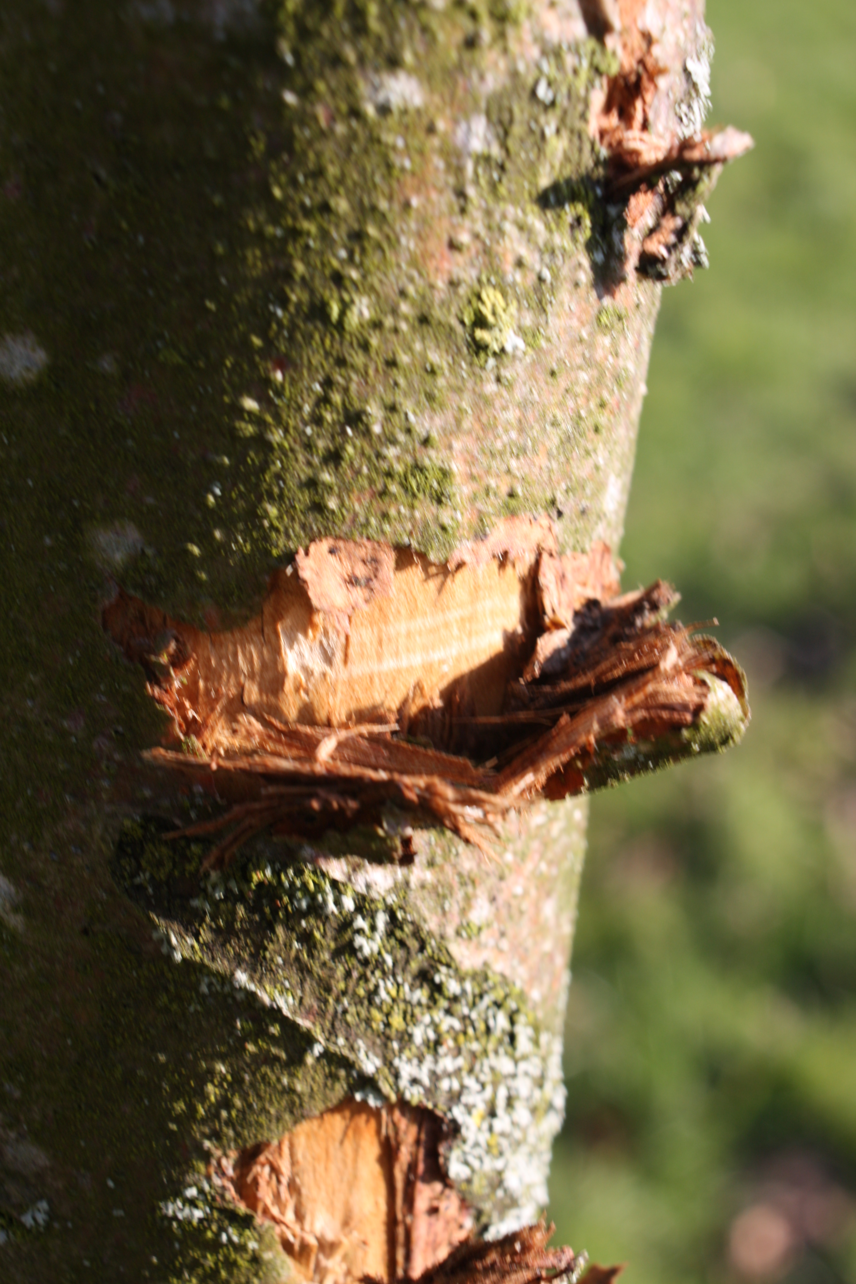 Construction Damage - Arbor Docs Professional Tree Care Service
