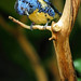 Tropical Blue Bird by beth keplinger