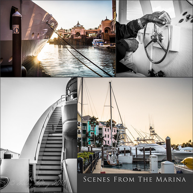 Scenes From the Marina