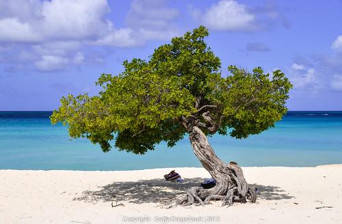 cruise seascape tree beach aruba explore palmbeach caribbeanislands celebrityeclipse nikond5100 sigma1802500mmf3563 caribbeanislandscruise2013