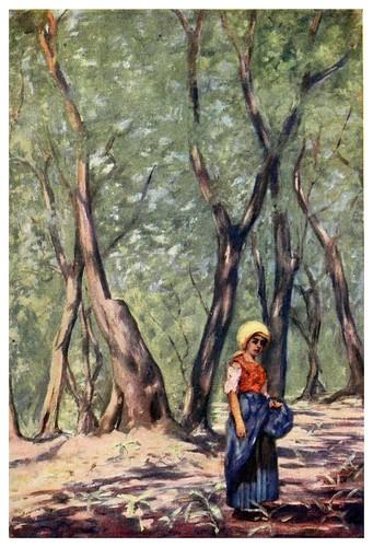 009-Olivos cerca de Massa-Naples -1904- Augustine Fitzgeral