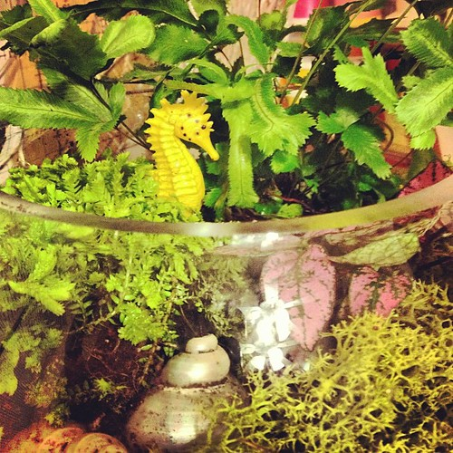 Built a SHQ terrarium tonight. :-) by seahorsequilts