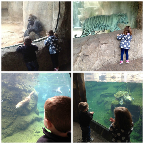 FWZoo Collage