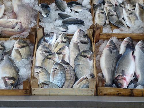 FishForSale