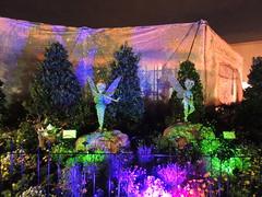 Epcot Flower & Garden Festival at night