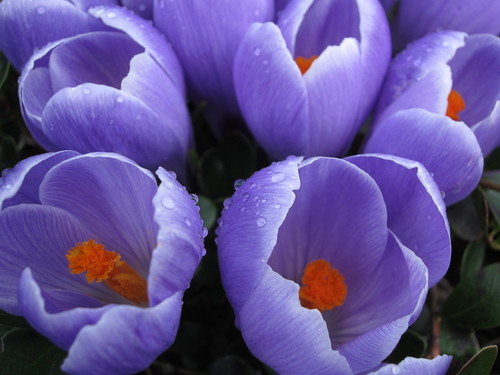 70/365: Purple and Orange by jchants