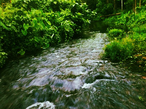 green water stream joy kerala chalakudy toucanfilter