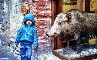 Beware of the Wild Hog