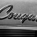 Cougar by Thomas Hawk