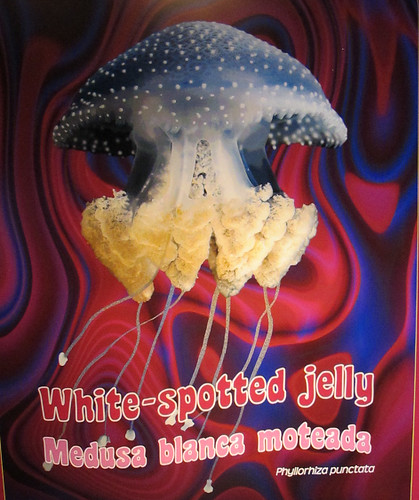 Whit-spotted jelly by Ed Bierman