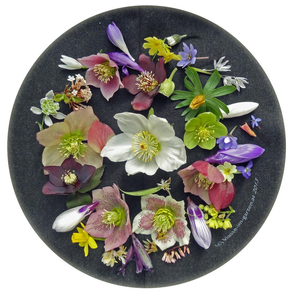 Frühlingsbeginn - Blütenkollekte