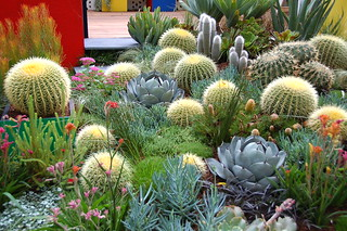 Imagen de Royal Exhibition Building cerca de North Melbourne. cactus melbourne flowershow royalexhibitionbuilding gardendisplay melbourneinternationalflowerandgardenshow2013