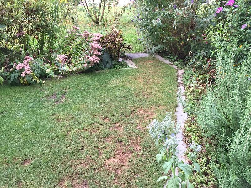 Dry Lawn