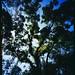 Sinar F1 45, Rodenstock Grandagon-N 65mm f4.5, Fujifilm RVP100. 4x5. Microtek ArtixScan F1. by greenlapwing