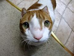 Fisheyed Cat