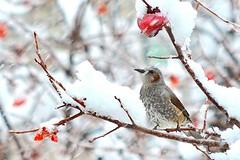 blossom(0.0), finch(0.0), cardinal(0.0), wren(1.0), animal(1.0), sparrow(1.0), flower(1.0), branch(1.0), winter(1.0), fauna(1.0), spring(1.0), twig(1.0), bird(1.0),