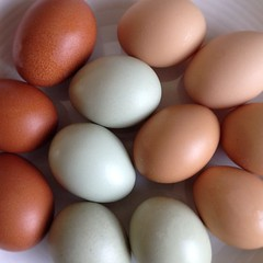 egg(1.0), food(1.0), egg(1.0), close-up(1.0),