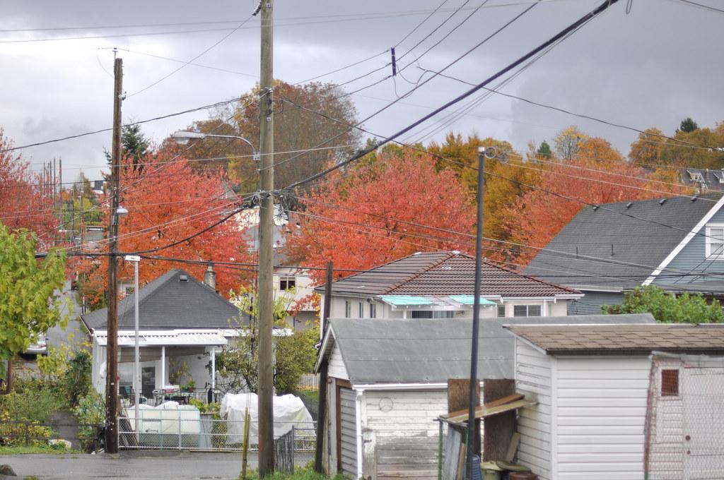 Laneway in fall