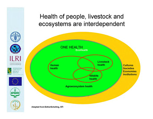 Health at the livestock-policy interface: Interdependence