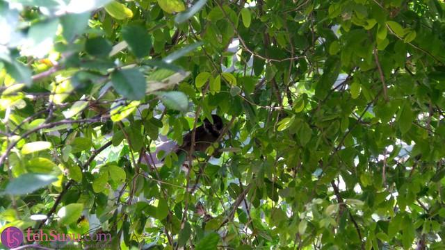 burung sembunyi di balik pohon rimbun di halaman depan