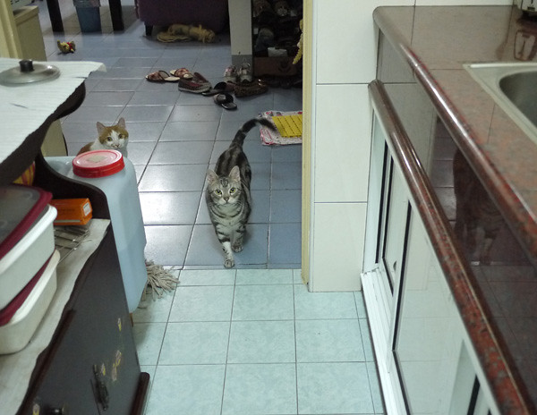 1-2如果當天是吃罐罐,那麼我們就會在廚房弄,接著二位小朋友就會從客廳蛇進來,有時是直接奔進來!XD
