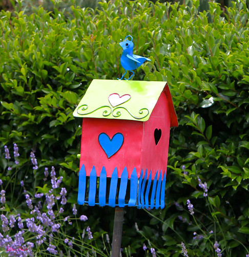 Colourful Bird Nesting Box