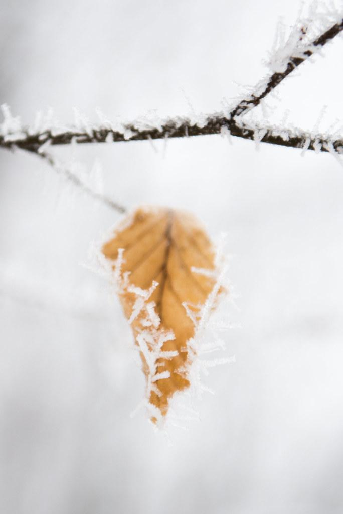 winterwonderland-27