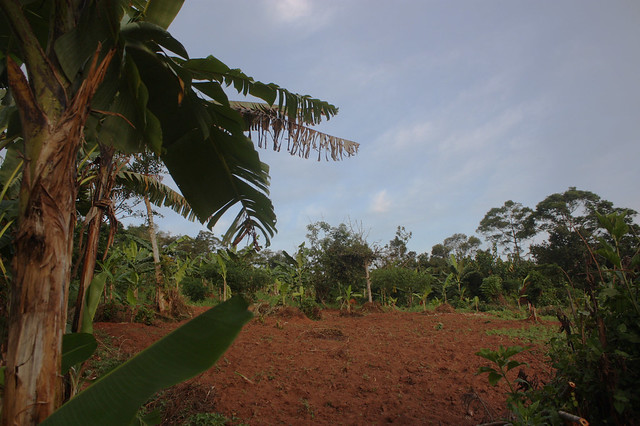 Earth Hour Forest - Uganda