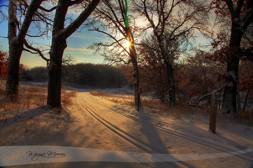 Golden Winter Morning by !!WaynePhotoGuy