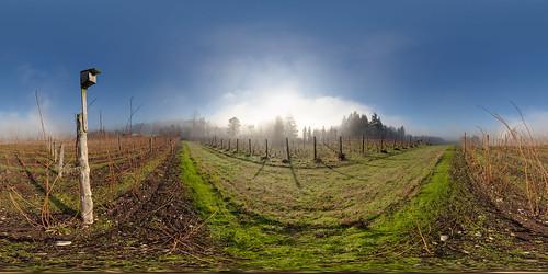 winter panorama fog landscape washington vineyard wine panoramic wa bainbridgeisland washingtonstate stitched 360x180 ptgui equirectangular canon15mm nodalninja3 canon5dmk2 garretveley promotecontrol