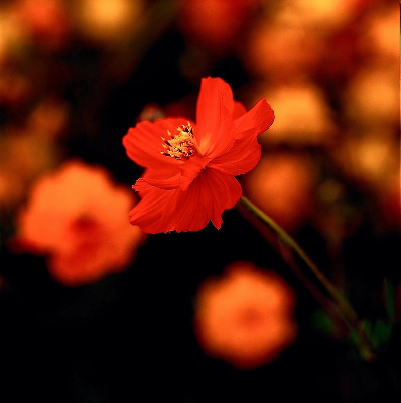 2012美濃新春