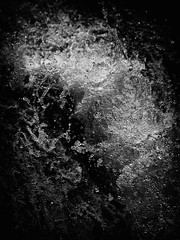 Spray (M2220594orf2 copy)