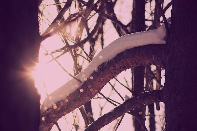 aurinko - kevät 045
