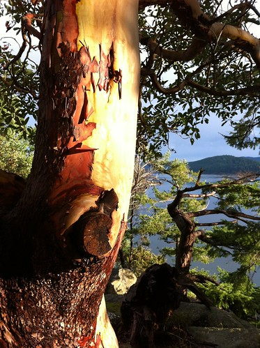Beautiful Mayne Arbutus