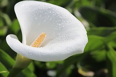lily, flower, yellow, plant, macro photography, wildflower, flora, close-up, plant stem, petal,