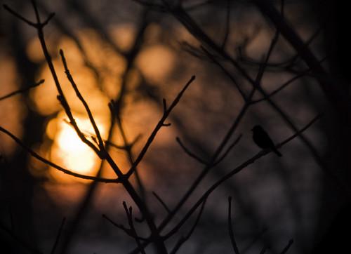 trees light sky sun colour bird nature silhouette sunrise canon dawn dof bokeh dorset sit fleet somewhere weymouth 100400 50d 113in2013