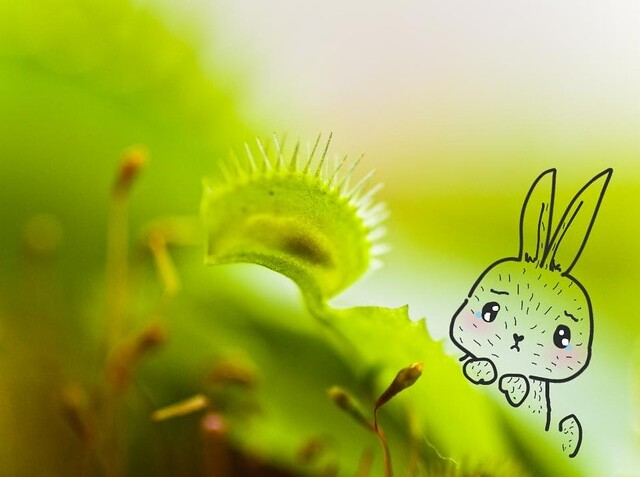 Little Bunny Feels Sorry for the Ant