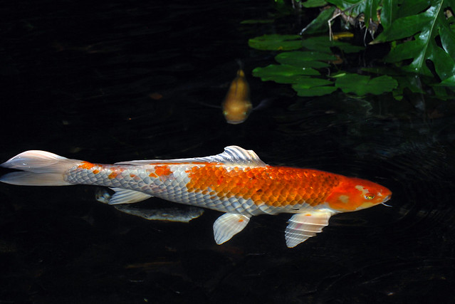 Fishy Fishy!