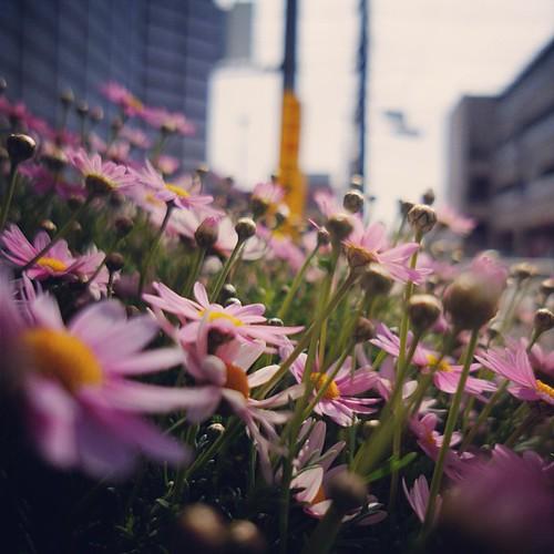 散歩>草花