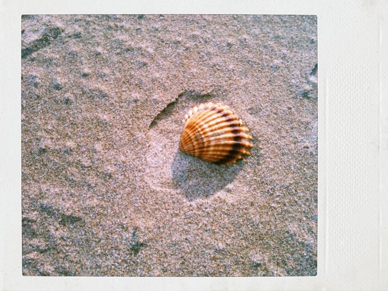 concha en la arena