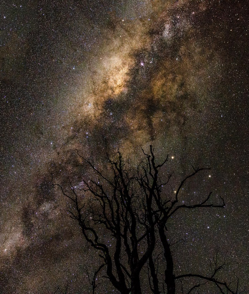 dead tree starscape   taken at Cressbrook Dam, Queensland, A