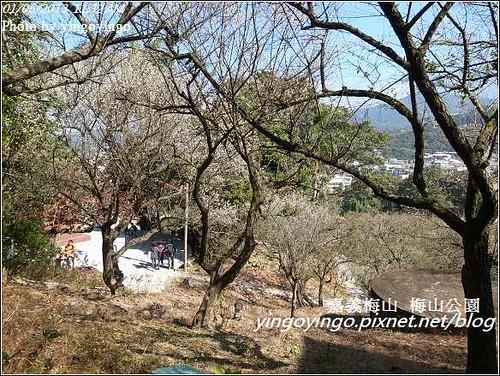 嘉義梅山_梅山公園20130106_R0071451
