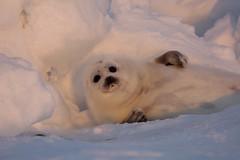 野生動物保育法修法,143種海洋哺乳類動物保育無距離。(圖片來源:台灣動物社會研究會)