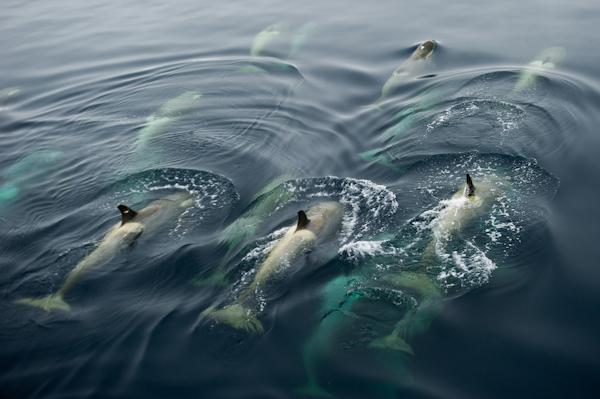 RYALE_Antarctica_Whales-9