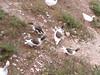 Kreta 2005-2 011