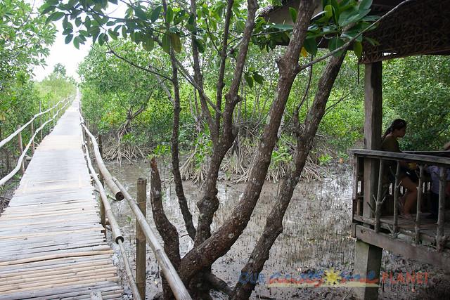 Bakhawan Eco-Park-41.jpg